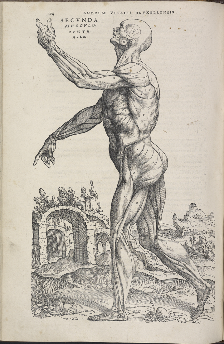 Who is the father of modern anatomy 8613123 - follow4more.info