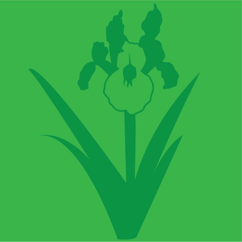 Iris Green Pigment
