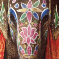 IndiaBook_Elephant_1.jpg
