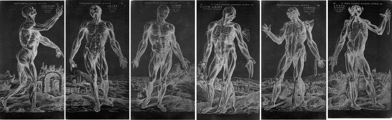 "These six facsimiles are reversed-image reproductions based on six woodcuts of ""muscle men"" from Andreas Vesalius' masterly treatise on human anatomy, De humani corporis fabrica libri septem (Basel, 1543)."