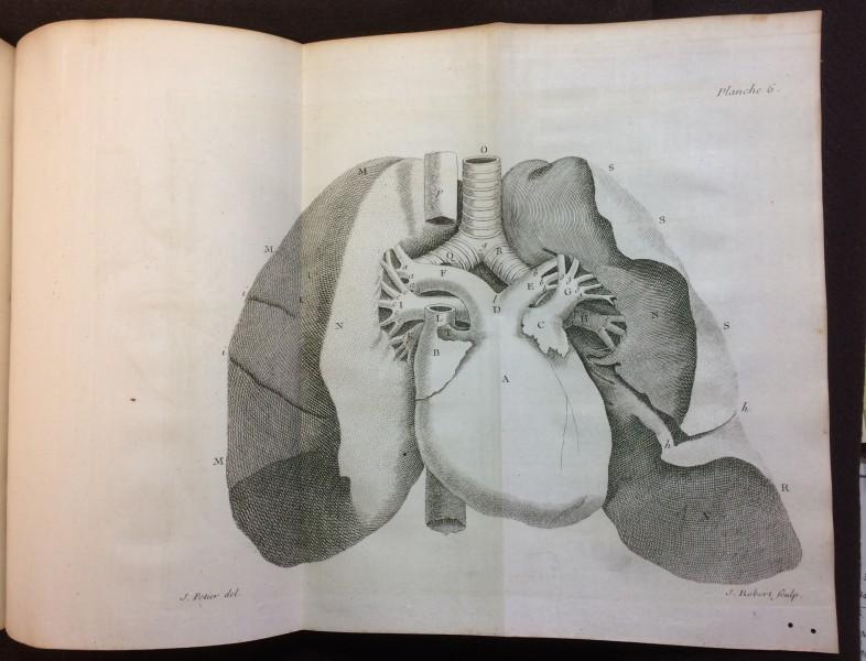 Copperplate engraving of the heart from Jean Baptiste Senac (1693-1770) Traitè de la structure du Coeur, de son action, et de ses maladies (Paris: Jacques Vincent, 1749)