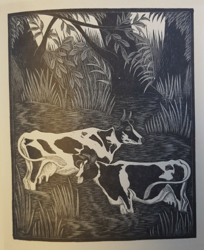 black and white wood engraving of cows