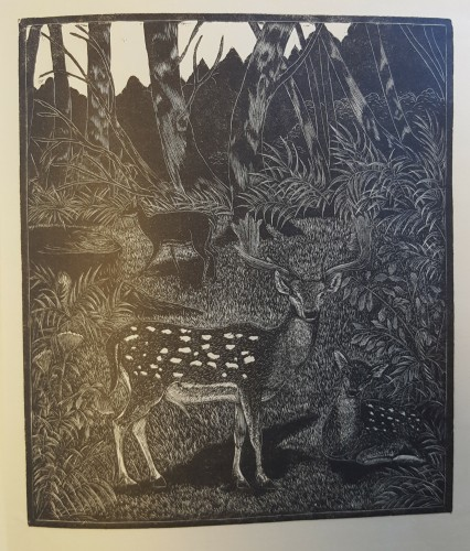 black and white wood engraving of deer