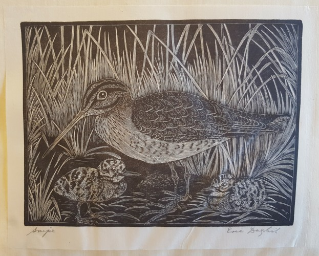 Original print. Black and white wood engraving of a snipe (bird)
