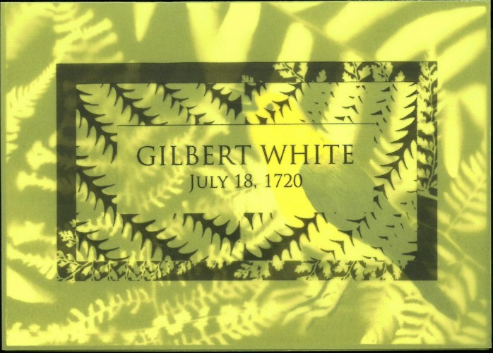 Black ferns on yellow translucent paper, overlying bird print. Text: Gilbert White, July 18, 1720