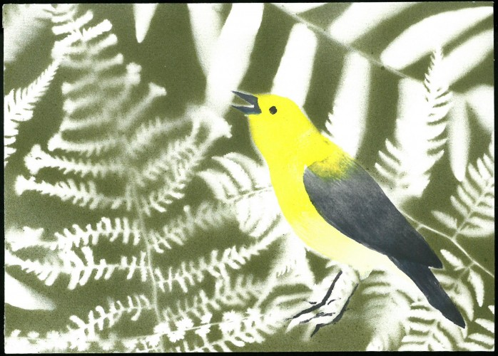 Yellow and black songbird on a background of ferns.