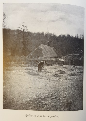 black and white photograph of a man working in a garden.