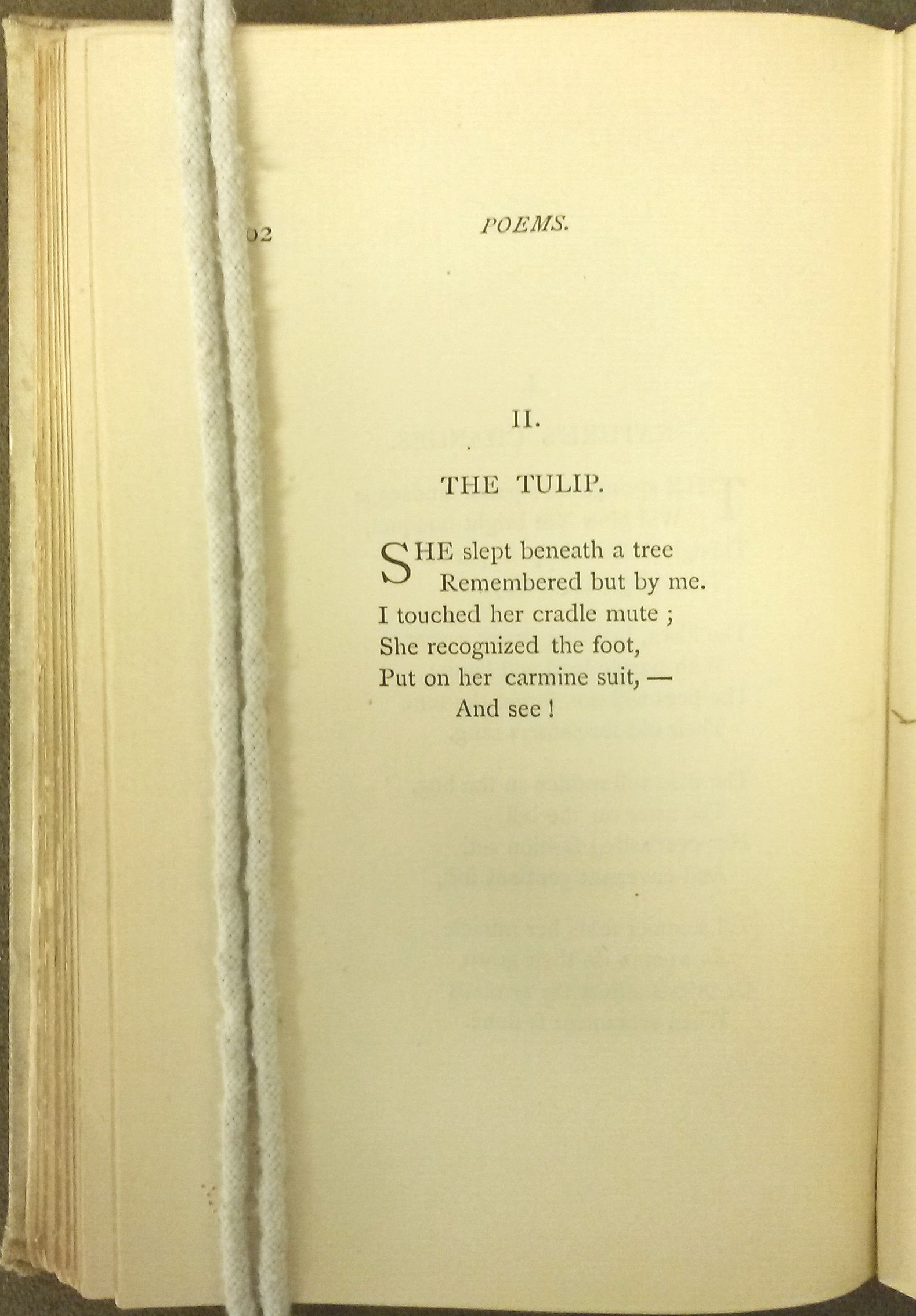 "Text of ""The Tulip"""
