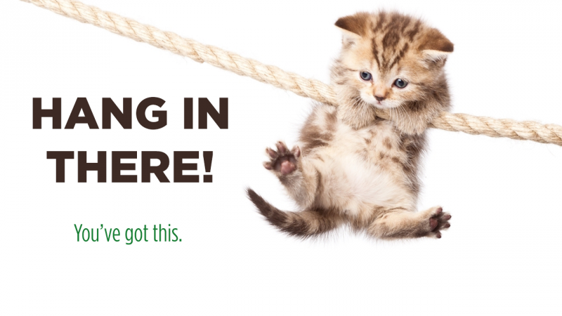 Image of a kitten hanging on a rope next to bold, black text that reads