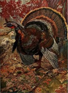 Image of a turkey in the woods