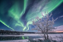 A pair of snow covered trees against the background of a green aurora sky.