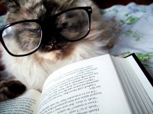 Cat wearing glasses reading a book.