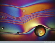 Polarized light micrograph of liquid crystal