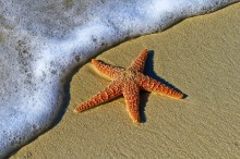 Image of a beach with sea foam rising, almost touching a starfish on the sand.