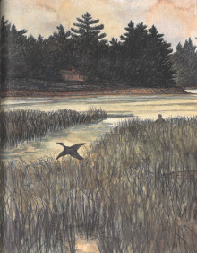 Color illustration of a bird flying low over a marsh. Island or peninsula in the background shows a small house amid dark pine trees