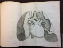 Copperplate engraving of the heart from Jean Baptiste Senac (1693-1770) Traitè de la structure du Coeur, de son action, et de ses maladies (Paris: Jacques Vincent, 1749)