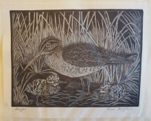 Black and white wood engraving of a bird in tall grass.