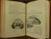 Illustrations of the Missisippi River