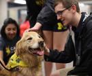 student petting a golden retriever