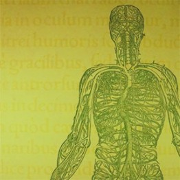 illustration of human body showing only veins from the waist up