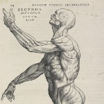 Illustration by Vesalius.