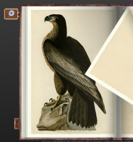 Detail of The Birds of America PictureIt Rare Book Reader application