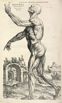 Photo of Vesalius sketch of human form.