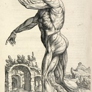 Photo of Vesalius sketch of human form.